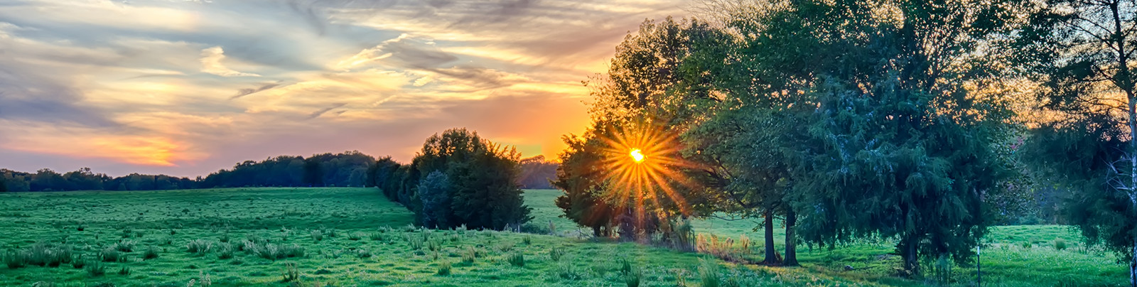 Home Banner - Sunset over green pasture